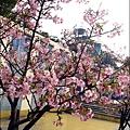 2011-0223-新竹公園-賞櫻花 (20).jpg