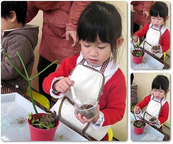 媽咪小太陽親子聚會-2011-0110-綠色-多肉植物 (30).jpg