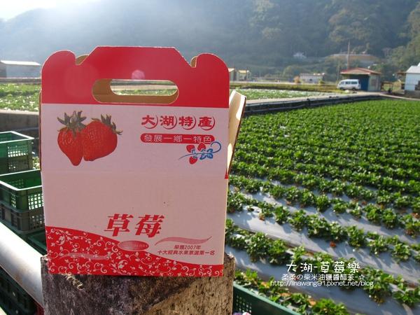 2011-0102-大湖採草莓 (6).jpg