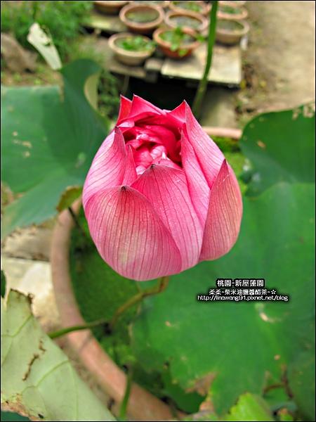 2010-0620-新屋蓮園 (32).jpg