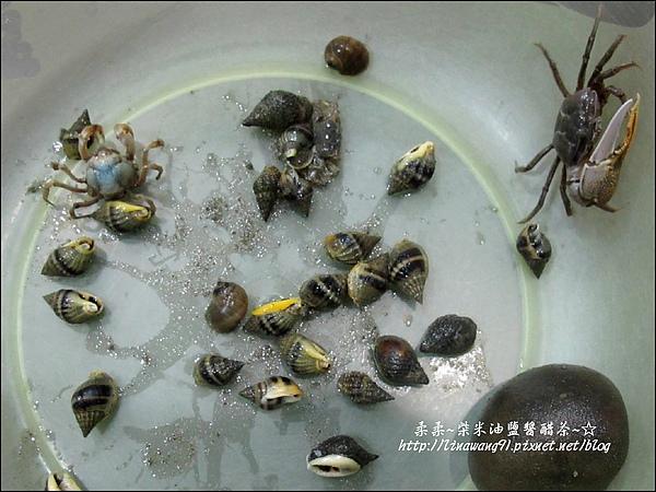2010-0531-香山濕地-沼潮蟹與螺.jpg
