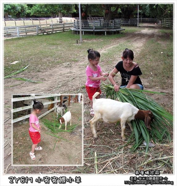 吳厝楊家莊-2010-0815 (57).jpg