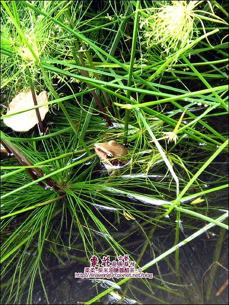苗栗-公館-棗莊-2010-0702 (50).jpg