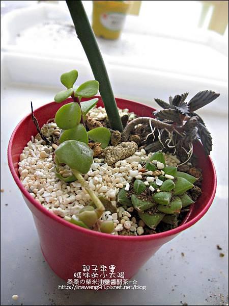 媽咪小太陽親子聚會-2011-0110-綠色-多肉植物 (19).jpg