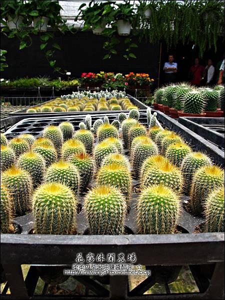 2010-0531-苗栗卓蘭-花露休閒農場 (4).jpg