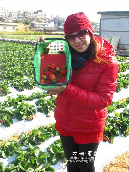 2011-0102-大湖採草莓 (27).jpg