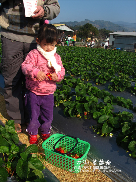 2011-0102-大湖採草莓 (8).jpg