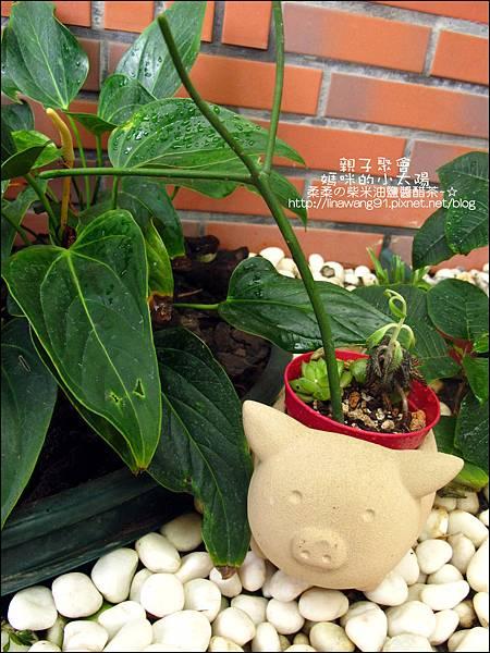 媽咪小太陽親子聚會-2011-0110-綠色-多肉植物 (21).jpg