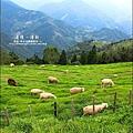 2010-0920-南投清境 (16).jpg