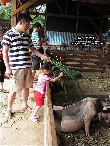 吳厝楊家莊-2010-0815 (50).jpg