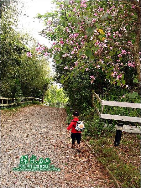 2010-0324-桃園-綠光森林 (6).jpg