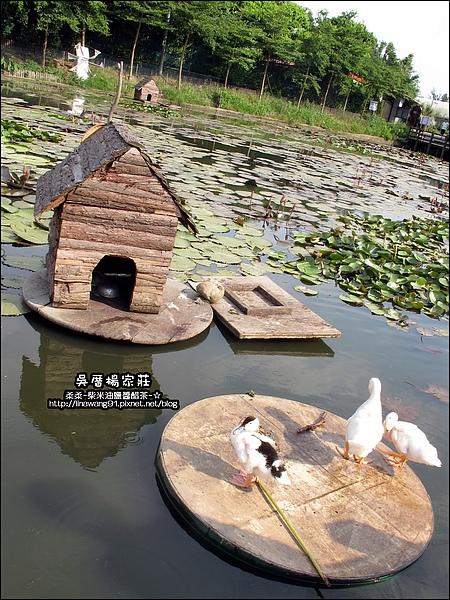 吳厝楊家莊-2010-0815 (12).jpg