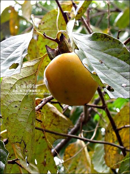 2010-1102-新埔柿餅節.jpg