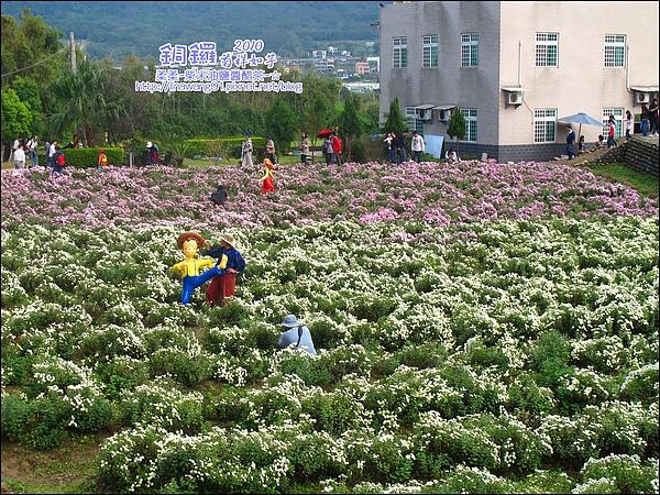 2010-1114-2010-銅鑼-杭菊芋頭節 (13).jpg