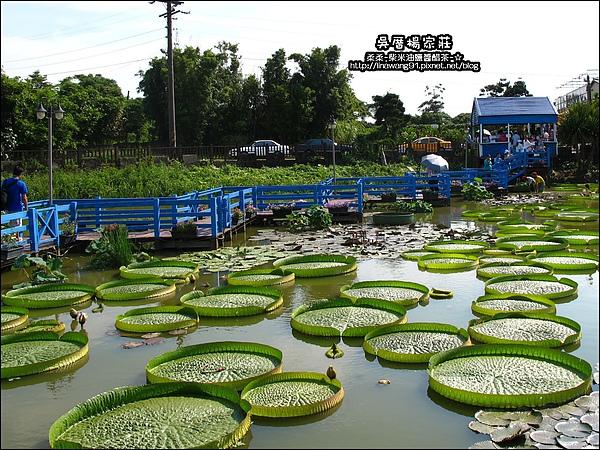 吳厝楊家莊-2010-0815 (7).jpg