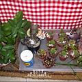 媽咪小太陽親子聚會-2011-0110-綠色-多肉植物 (24).jpg