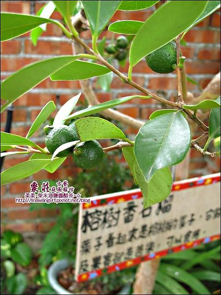 苗栗-公館-棗莊-2010-0702 (48).jpg
