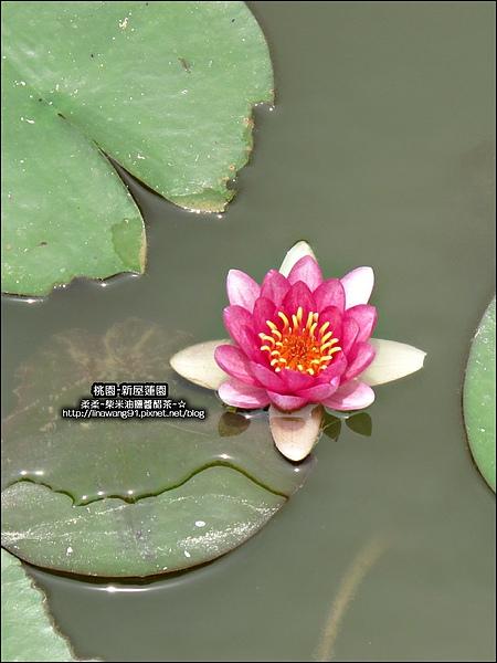 2010-0620-新屋蓮園 (21).jpg