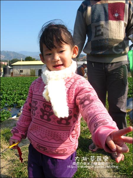 2011-0102-大湖採草莓 (10).jpg