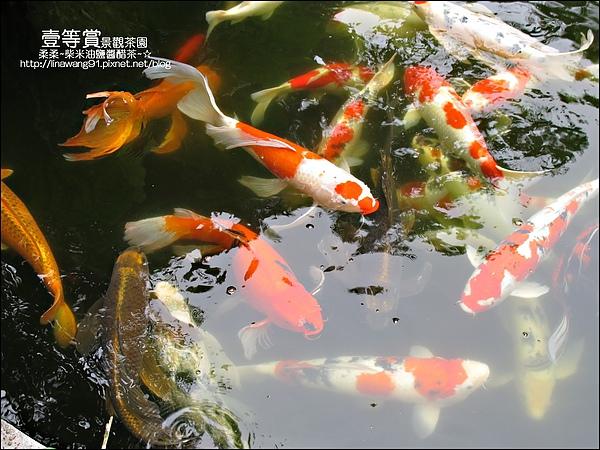 2010-0806-壹等賞景觀茶園 (23).jpg