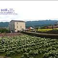 2010-1114-2010-銅鑼-杭菊芋頭節 (14).jpg
