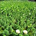 2010-0531-vilavilla山居印象農莊 (28).jpg