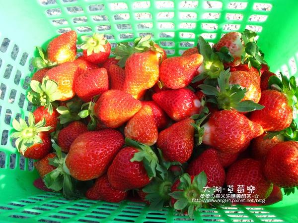 2011-0102-大湖採草莓 (5).jpg