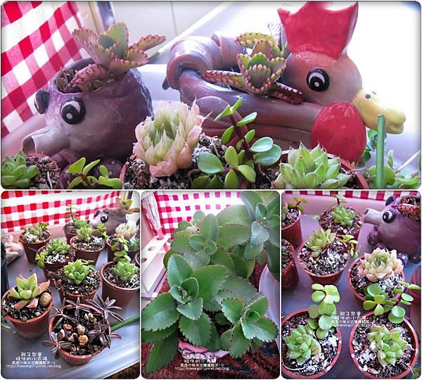 媽咪小太陽親子聚會-2011-0110-綠色-多肉植物 (25).jpg