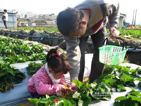 2011-0102-大湖採草莓 (1).jpg