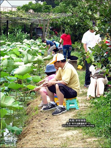 2010-0620-新屋蓮園 (4).jpg