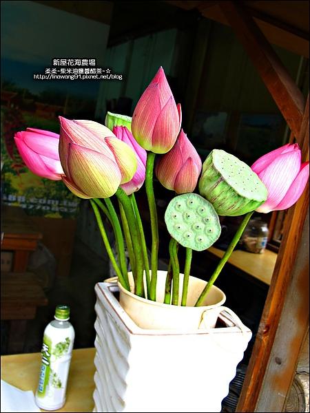 2010-0620-新屋花海農場 (19).jpg