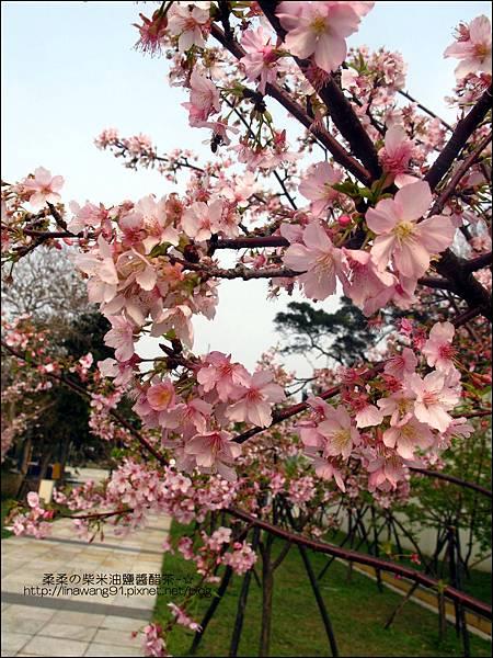 2011-0223-新竹公園-賞櫻花.jpg