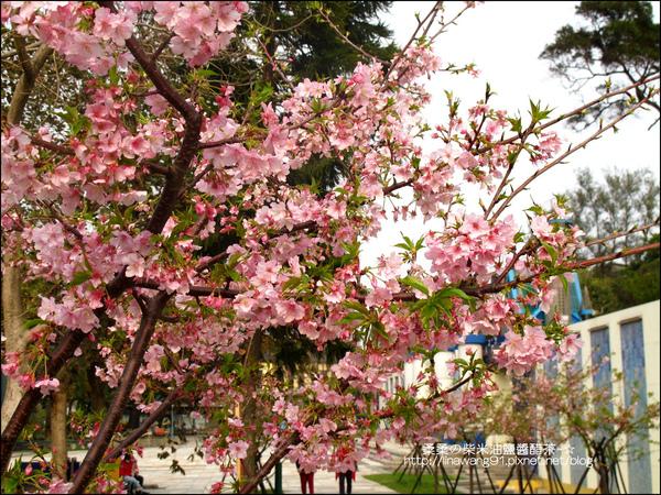 2011-0223-新竹公園-賞櫻花 (7).jpg
