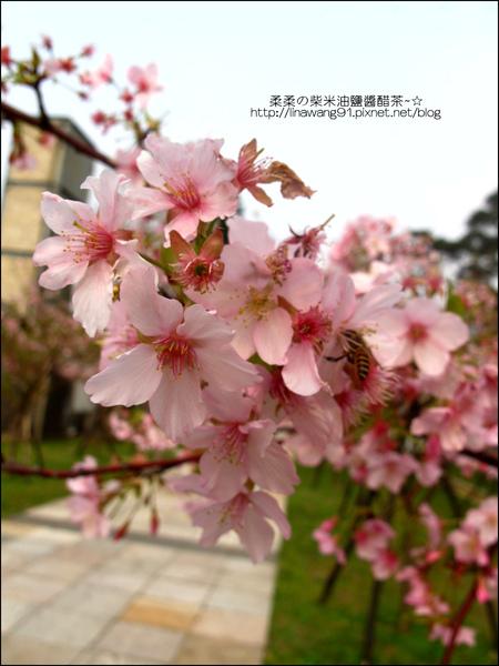2011-0223-新竹公園-賞櫻花 (1).jpg