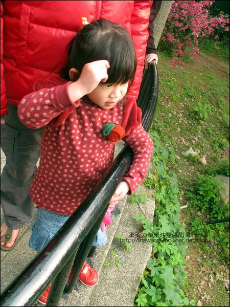 2011-0223-新竹公園-賞櫻花 (14).jpg
