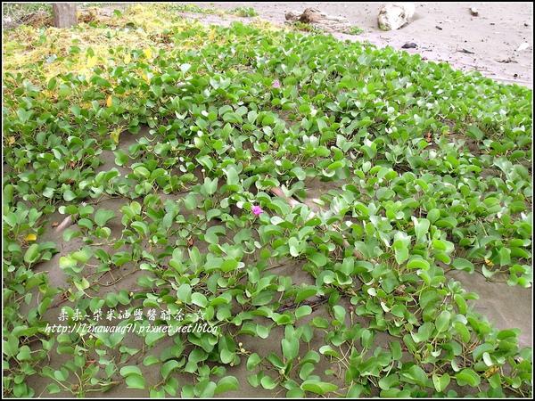 永安漁港-綠色走廊2009-1011 (10).jpg