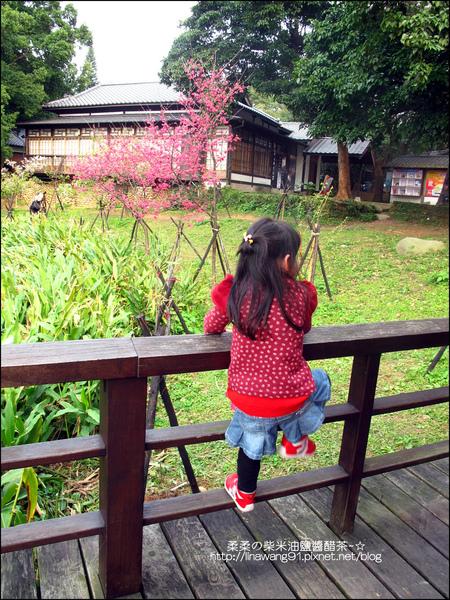 2011-0223-新竹公園-賞櫻花 (18).jpg