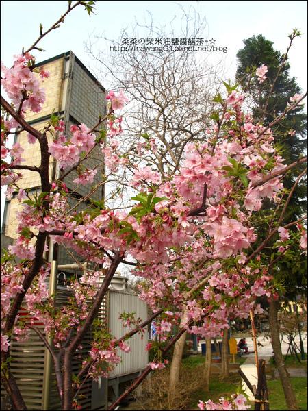 2011-0223-新竹公園-賞櫻花 (5).jpg