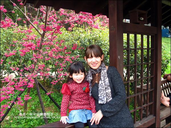 2011-0223-新竹公園-賞櫻花 (19).jpg