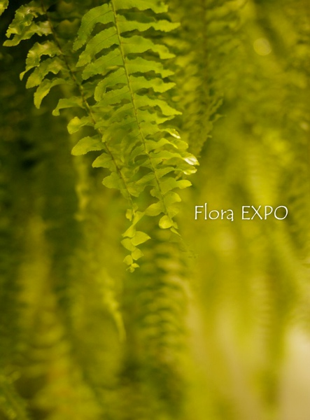Flora-36.jpg