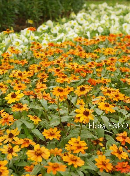Flora-29.jpg