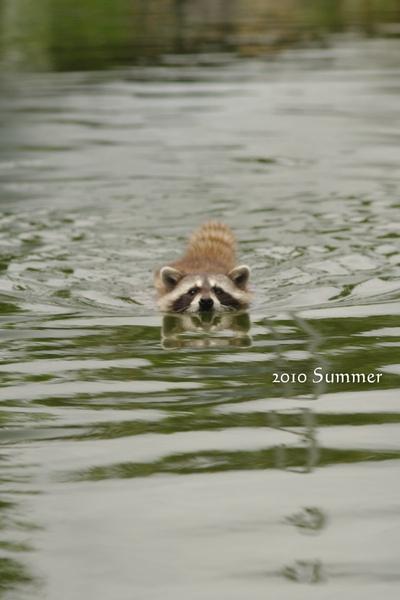 2010 summer-86.jpg