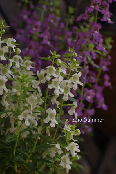 2010 summer-9.jpg