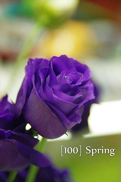 100 Spring-88.jpg