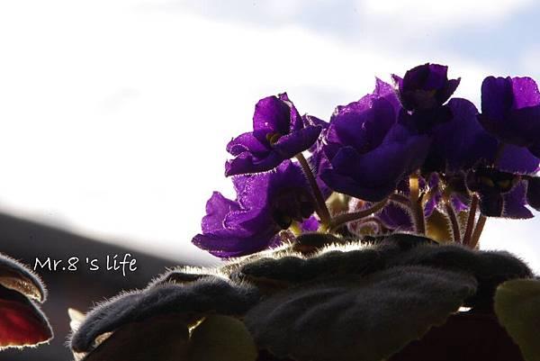 Life-46.jpg