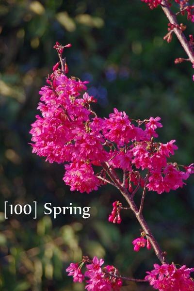 100 Spring-15.jpg