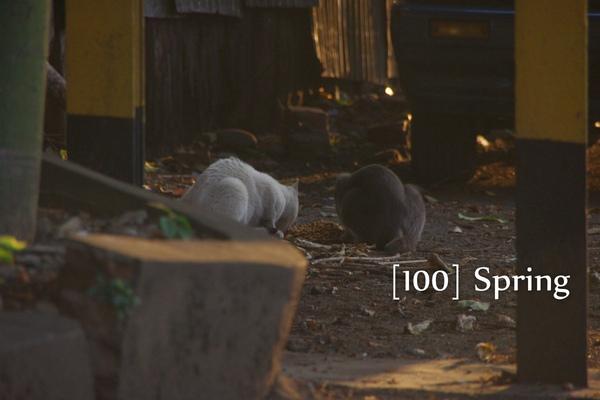 100 Spring-35.jpg
