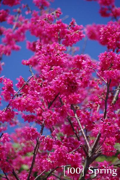 100 Spring-4.jpg