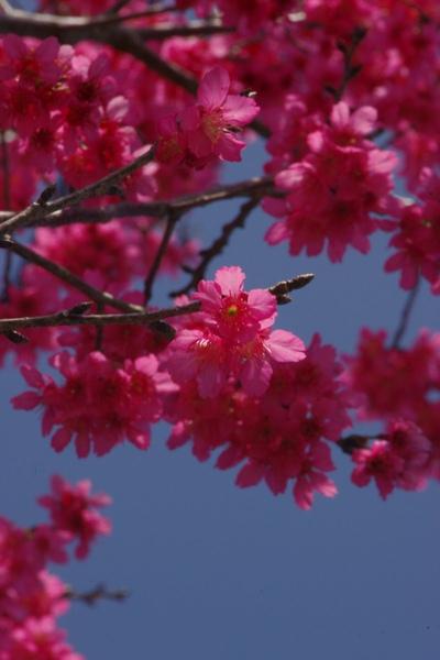 100 Spring-9.jpg