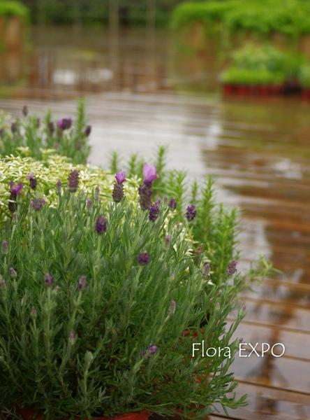 Flora-34.jpg